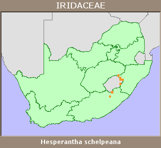 IRIDACEAE distribution lesotho