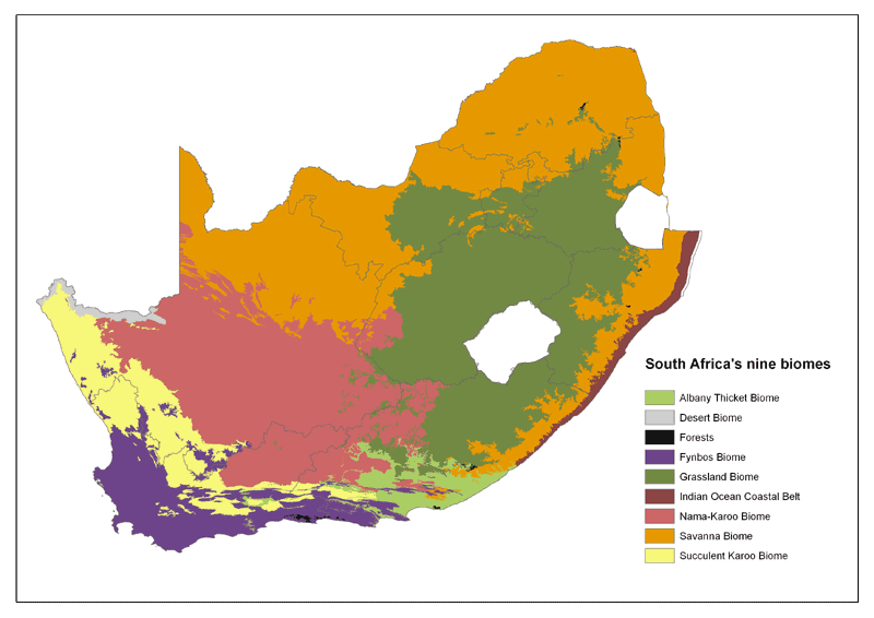 South African biomes